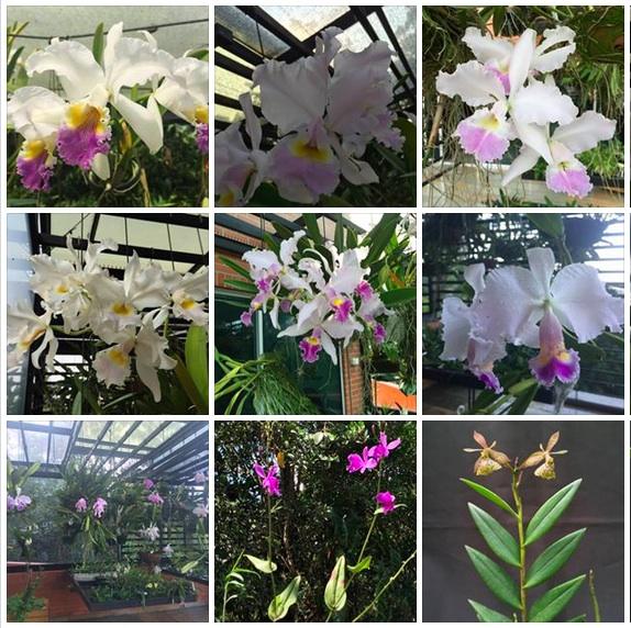 Orquídeas Katía a Murabilia 2016