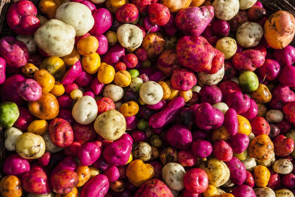Patate: dal Perù alla conquista del mondo