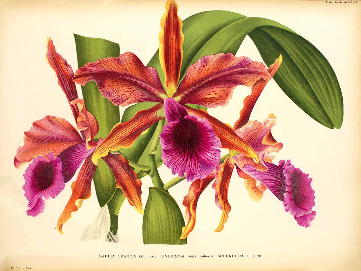 Orchidee… un mondo: webinar con Alberto Grossi, giovedì 12 agosto alle ore 21